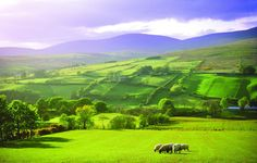 The Sperrin Mountains in County Tyrone certainly make for a colorful vacation spot #Blessingbourne #outdooractivities #countrylife #northernireland