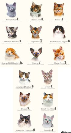 Cat Breeds - Cluster of Kittens