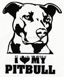 Resultado de imagem para imagem pitbull