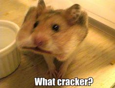 What cracker?? LMAO!