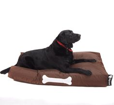 Show your pooch how much you love him or her with their very own Elephant Dog Beds! The nylon over is removable for easy washing. Beds For Sale, Dog Beds, Bean Bag, Baby Care, Contemporary Design, Cosy, Camouflage, Your Dog, Elephant