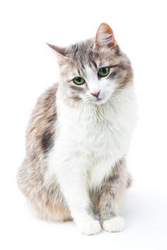 Er du bekymret for at din katt ikke får sunn og god mat? Homemade Cat Food, Cat Nutrition, Nutrition Guide, Pet Treats, All About Cats, Cat Health, Diy Stuffed Animals, I Love Cats, Pet Care