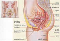 Pelvic Organ Prolapse | Urology Team