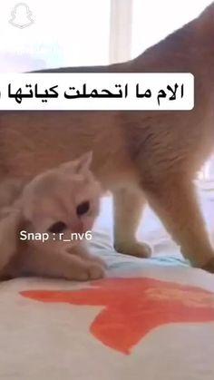 ههههههههههه
