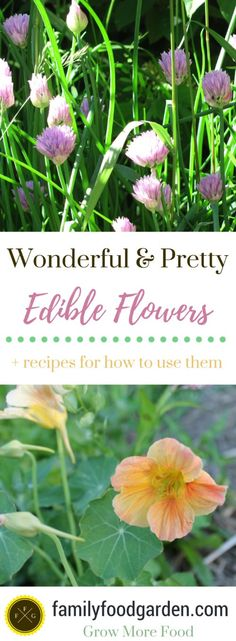 Edible Gardening Edible flowers ways to use them - List of edible flowers for syrups, wines, infused into oils or vinegars and salads. Lots of edible flower recipes for cakes or homemade beauty products List Of Edible Flowers, Edible Flowers Cake, Edible Plants, Edible Garden, Quick Garden, Healthy Fruits And Vegetables, Types Of Herbs, Outdoor Flowers, Gardens