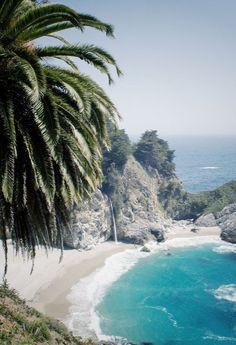 palms + islands