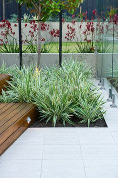 """- red kangaroo paw plus white and green variegated plants in masses"" Dianella. Tolerate dry shade"