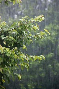 The sound of the rain!