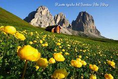 Ricette+tipiche+del+Trentino+Alto+Adige