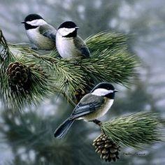 ........., Kuş – Feedfloyd