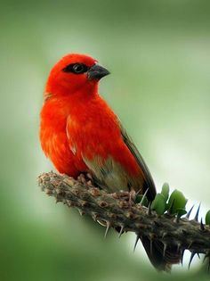 Simply, sublimely RED!
