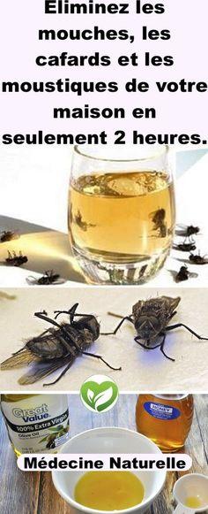 �liminez les mouches, les cafards et les moustiques de votre maison en seulement 2 heures.