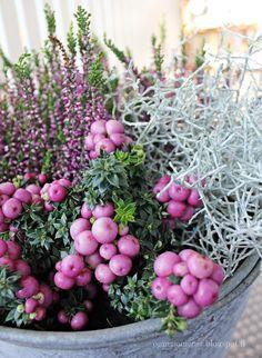 .. Garden Art, Winter Garden, Balcony Garden, Plants, Container Plants, Outdoor Gardens, Flowers, Container Gardening, Rock Garden