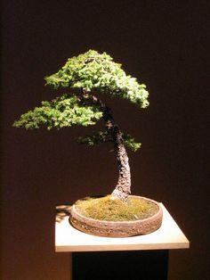 Bonsai. An Art of patience.
