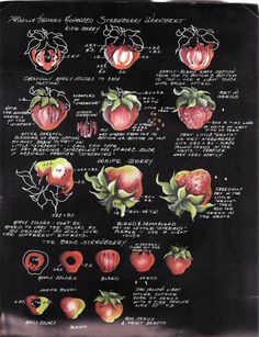 How to paint strawberries by Priscilla Hauser