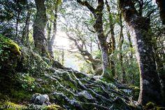 Twisted but beautiful... [Arthur's Pass - New Zealand] [OC] [3000x2000]   landscape Nature Photos