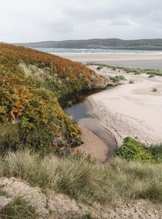 The bracken and machair covered sand dunes at Skinnet Bay near the North Coast 500 route in Scotland #Scotland #ScottishHighlands #TravelPhotography @goingthewholehogg