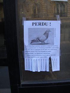 https://flic.kr/p/sB5GGz | OTH 1096 - Pigeon