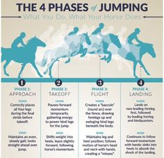 4 Jumping Phases ~ HorseCollaborative I also add the depart where the horse maintains rhythm and the rider maintains straightness away and begins to plan for next fence if doing a course. Horse Riding Tips, Horse Tips, Dressage, Horse Exercises, Horse Facts, Horse Camp, Riding Lessons, Horse Shirt, Horse Quotes