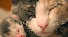 49 photos de chats a couper le souffle Cocktail Fruit, Photo Chat, Ron Ron, Souffle, Animals, Lime Juice, Automobile, Cats, Animales