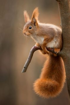 There are lots of squirrel like mammals like the ground hog, gopher as well as prairie dog. When it comes to foods, what do squirrel love to eat? Nature Animals, Animals And Pets, Baby Animals, Funny Animals, Cute Animals, Wild Animals, Funny Pets, Autumn Animals, Animal Babies