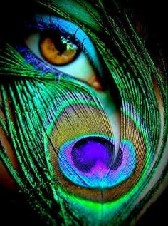Peacock eye makeup - purple mascara