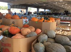 Wagon loads of fall produce to be auctioned in Amish country. Mt. Hope, Ohio.