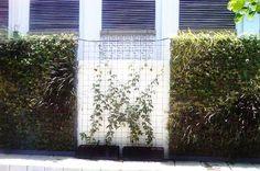 Vertical Garden Bank Indonesia Jakarta Kota dibangun memanfaatkan tembok dan pagar sekitar museum Bank Indonesia di Jakarta Kota
