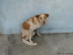 dogs of Iquitos, Peru   Premium Dog Insurance! http://www.offers.couponrainbow.com/embrace-pet-insurance/