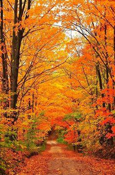 Autumn | Colourful Trees Surround a  Country Road Beautiful Photo | Fine Art Print Terri Gostola
