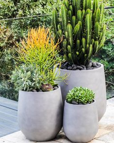 173 Likes, 8 Comments - Martin Brothers ( on Instagr. 173 Likes, 8 Com Succulent Outdoor, Succulent Gardening, Outdoor Planters, Cacti And Succulents, Garden Planters, Container Gardening, Front Porch Landscape, Gardening Photography, Pot Plante
