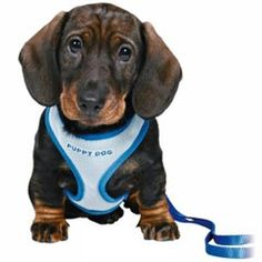 Trixie Soft Puppy Harness with Lead on Sale | Free UK Delivery | PetPlanet.co.uk