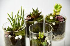 How To: DIY Modern Terrarium | YLiving