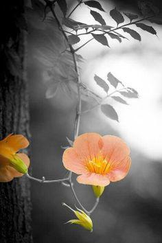 A touch of color ✿⊱╮ ॐ ✫ ✫ ✫ ✫ ♥ ❖❣❖✿ღ✿ ॐ ☀️☀️☀️ ✿⊱✦★ ♥ ♡༺✿ ☾♡ ♥ ♫ La-la-la Bonne vie ♪ ♥❀ ♢♦ ♡ ❊ ** Have a Nice Day! ** ❊ ღ‿ ❀♥ ~ Mon 12th Oct 2015 ~ ~ ❤♡༻ ☆༺❀ .•` ✿⊱ ♡༻ ღ☀ᴀ ρᴇᴀcᴇғυʟ ρᴀʀᴀᴅısᴇ¸.•` ✿⊱╮