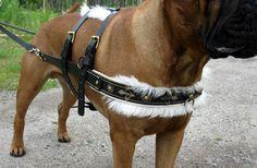 dog cart pulling harness
