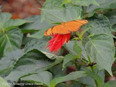 Butterfly garden in Costa Rica