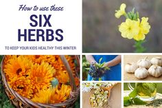 6 Must-Have Herbs to Keep Your Kids Healthy This Winter