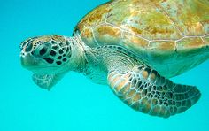 Barbados.  I got to swim with sea turtles while I was there on a cruise.  Probably the coolest thing I have ever done.