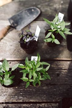 Get The Perfect Herb Garden With These Simple Tips Herb gardening is an excellent way to make sure that your family is getting the best produce that they can. You will not be using any pesticides, and since you are growing everything Herb Garden Design, Diy Herb Garden, Cottage Garden Plants, Vegetable Garden, Garden Bed, Little Green House, Little Plants, Gras, Dream Garden