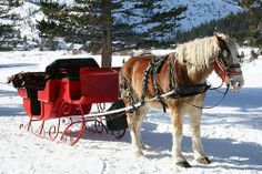 Christmas Horse Sleigh Rides For The Guests Deco Dinner