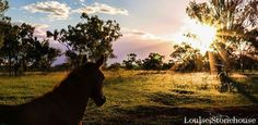 Peaceful sunset Credit to: Louise Stonehouse Beautiful Horses, Sunset, Sunsets, The Sunset