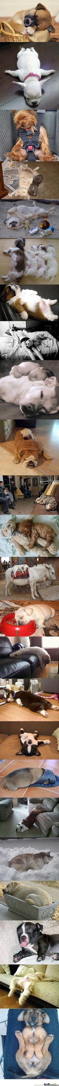 Sleep Attack. The third dog is definitely mine