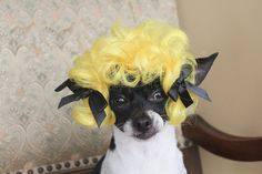 Pet wig for dog or cat by lenapavia on Etsy