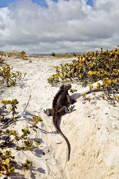 Tortuga Beach Galapagos Islands