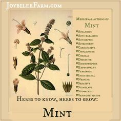 Herbs to know, herbs to grow: Mint So many beneficial actions for such an easy to grow garden perennial. Joybilee Farm