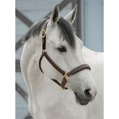 Innovative Flex-Cushion™ hidden in our Dover Saddlery® InDulge™ Fancy-Stitched Halter provides your horse with luxurious cushioning. Dover Saddlery, Andalusian Horse, Horse Tack, Dressage, Equestrian, Fancy, Grey Horses, Plus Belle, Horse Stuff