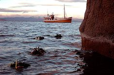 Dykking og snorkling i Lofoten | Opplevelser og aktiviteter i Lofoten (Snorkling i Henningsvær. Tips Frode & Marita.)