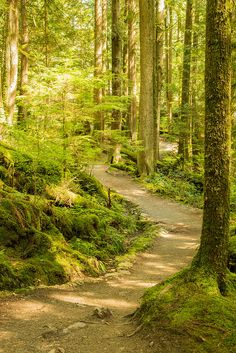Buntzen lake trail - like the trail! Places Around The World, Around The Worlds, Hiking Routes, Painting Trees, Tree Art, Walking Shoes, Pathways, British Columbia, Great Photos