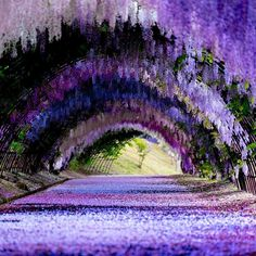 Wisteria Tunnel Kawachi Fuji Gardens in Kitakyushu Japan Beautiful Landscapes, Beautiful Gardens, Beautiful Flowers, Wisteria Garden, Wisteria Tree, Wisteria Tunnel Japan, Wisteria Wedding, Garden Bed, Beautiful Places To Travel