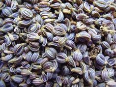Как разбудить семена петрушки перед посадкой